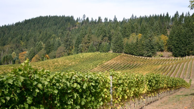 Willamette Valley – Oregon Wine Country