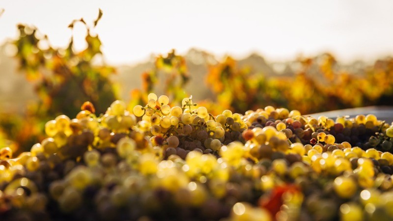 Wine Regions Oregon